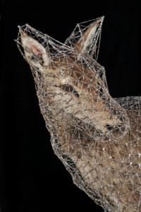 La constellation de la biche II, Julien Salaud, 2012 Taxidrmie, clous, fils de coton, perles de rocaille 160 x 180 x 93 cm