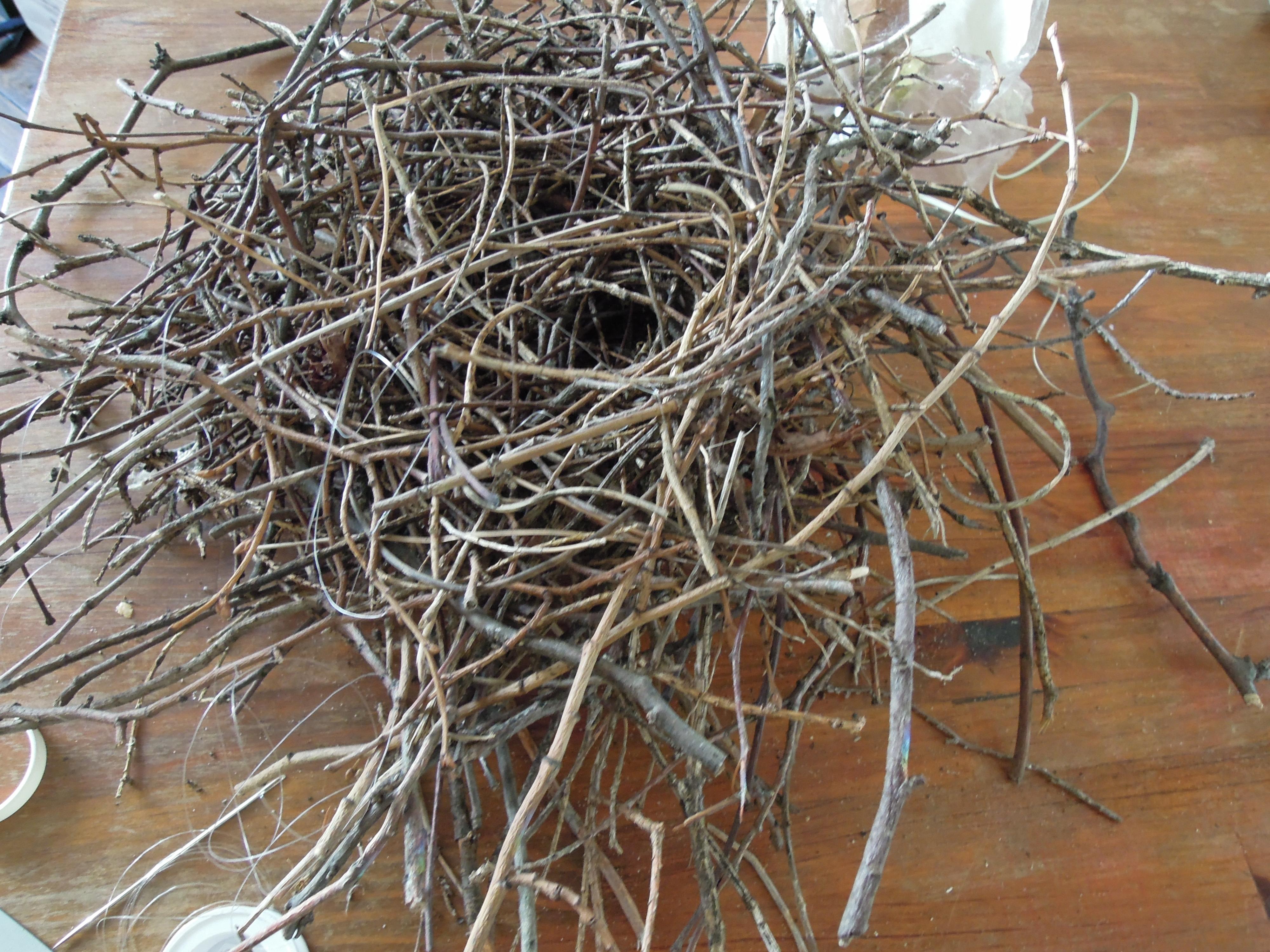 photo comment reconnaitre un nid d oiseau
